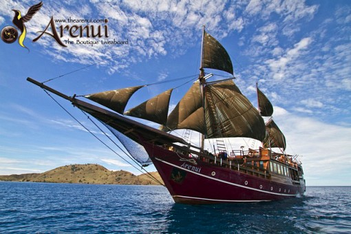 Arenui Liveaboard, Indonesia July 2017